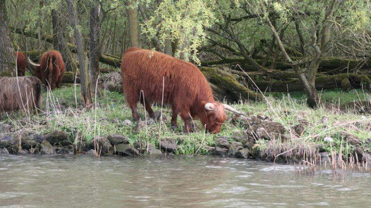 Oog voor de natuur met Natura 2000