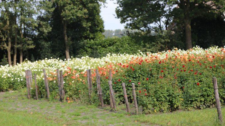 7 leuke pluktuinen in Noord Brabant