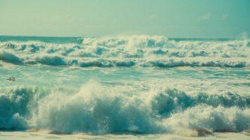 Green Wave Li Edelkoort